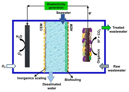 New insights into the application of microbial desalination cells for desalination and bioelectricity generation
