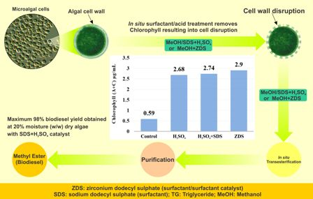 Surfactant-assisted direct biodiesel production from wet Nannochloropsis occulata by in situ transesterification/reactive extraction