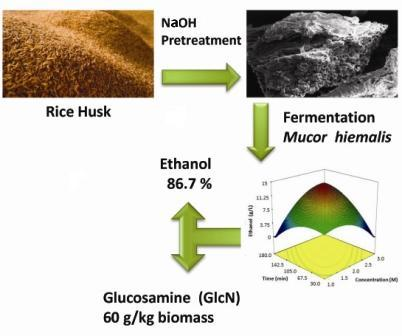 Enhanced ethanol and glucosamine production from rice husk by NAOH pretreatment and fermentation by fungus Mucor hiemalis