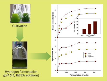 Biogenic H2 production from mixed microalgae biomass: impact of pH control and methanogenic inhibitor (BESA) addition