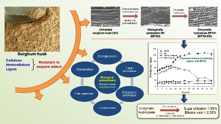 Enzymatic hydrolysis of biologically pretreated sorghum husk for bioethanol production