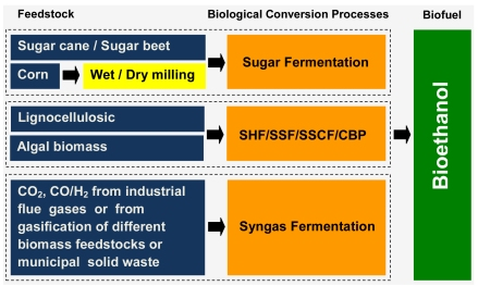 A review of conversion processes for bioethanol production with a focus on syngas fermentation