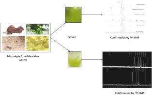 An investigation of biodiesel production from microalgae found in Mauritian waters