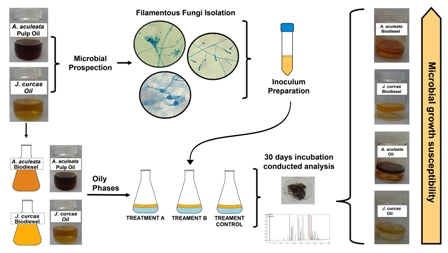Microbial growth in Acrocomia aculeata pulp oil, Jatropha curcas oil, and their respective biodiesels under simulated storage conditions