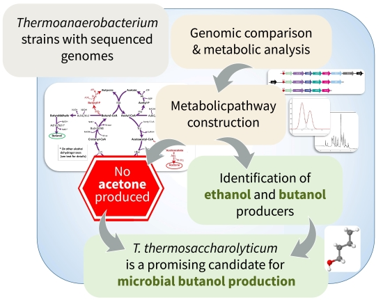 Genomic and metabolic insights into solvent production by <i>Thermoanaerobacterium thermosaccharolyticum</i> GSU5