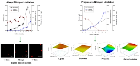 Simultaneous effect of nitrate (NO3-) concentration, carbon dioxide (CO2) supply and nitrogen limitation on biomass, lipids, carbohydrates and proteins accumulation in Nannochloropsis oculata