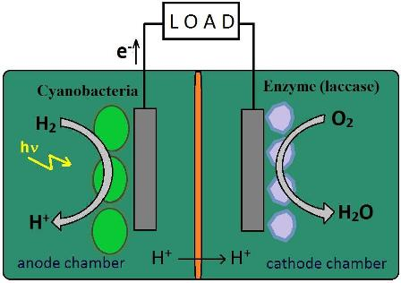 Photoelectrochemical cells based on photosynthetic systems: a review