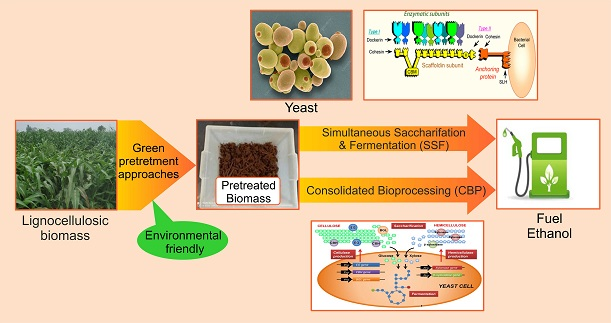 Recent advances in bioethanol production from lignocelluloses: a comprehensive review with a focus on enzyme engineering and designer biocatalysts