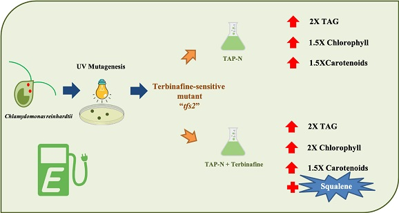 Improving the co-production of triacylglycerol and isoprenoids in <i>Chlamydomonas</i>