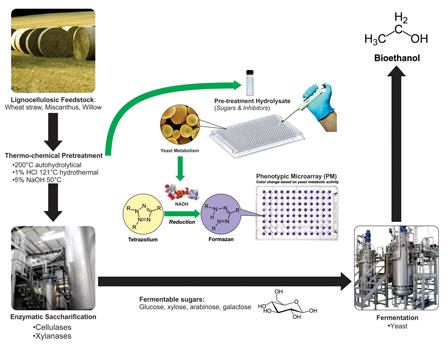 Evaluation of different lignocellulosic biomass pretreatments by phenotypic microarray-based metabolic analysis of fermenting yeast