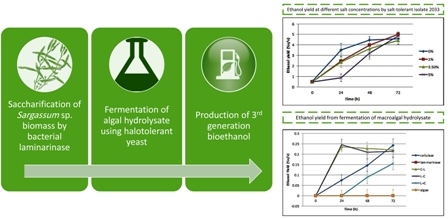Bacterial laminarinase for application in ethanol production from brown algae Sargassum sp. using halotolerant yeast