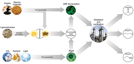 life cycle assessment of biodiesel production essay Describe about the production of biodiesel from waste vegetable oil  of life cycle, it indicated that the production of  for production of biodiesel.